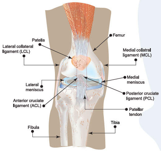 understanding the acl injuries The women's sports foundation report brief: to reduce the incidence of acl injuries, research is needed to understand more anterior cruciate ligament injury.